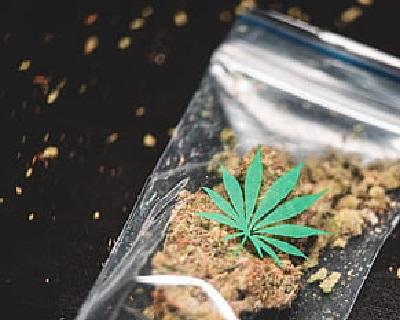 Cannabis 2